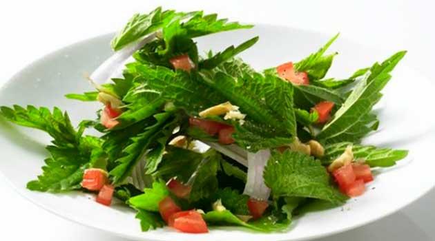Салати з кропиви