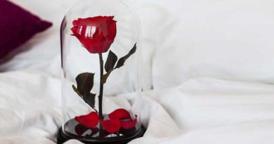 Квіти під захистом