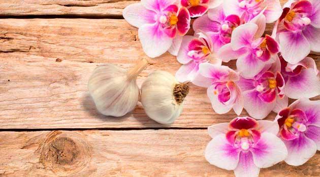 порятунок для орхідей