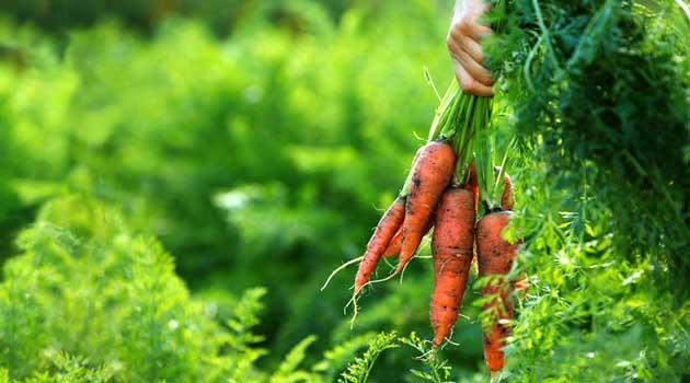 Морквяні секрети