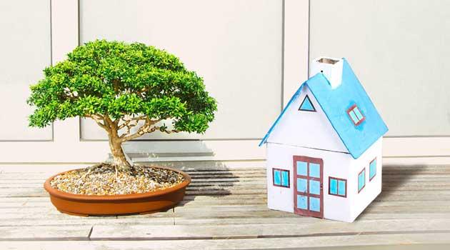 Не саджайте ці дерева поруч із будинком