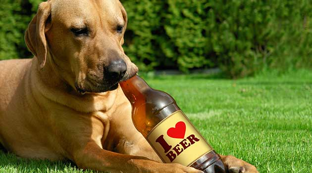 Пиво найпопулярніший корм для собак
