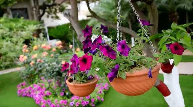 Як створити підвісний квітник