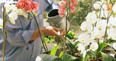 Щоб орхідея цвіла