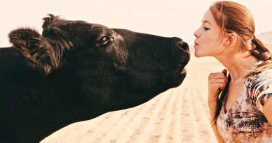 Влада Австрії просить жителів перестати цілувати корів