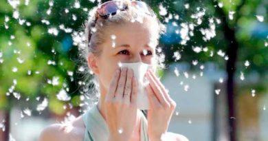 Як врятуватися від тополиного пуху