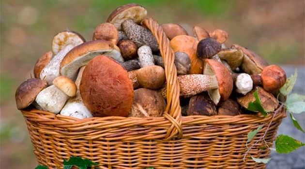 Як правильно збирати гриби?