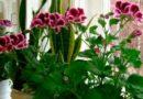 Дзеркало додасть світла рослинам