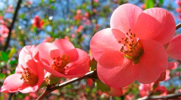 Весна квітує