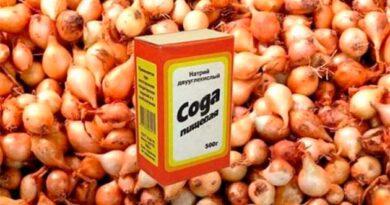 Харчова сода поліпшить урожай цибулі