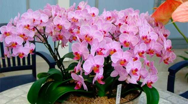 Не тримайте вдома орхідеї