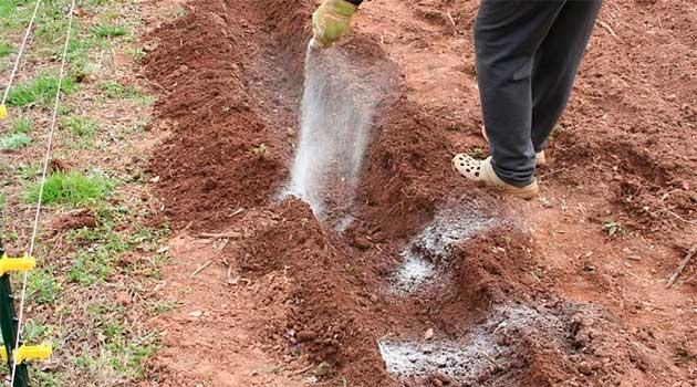 Як краще удобрити ґрунт під картоплю?
