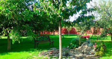 Як правильно розбити молодий сад на дачі