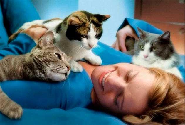 Коти лікують серце