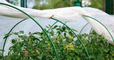Захист рослин від весняних заморозків