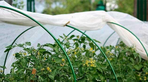 захистити рослини від весняних заморозків