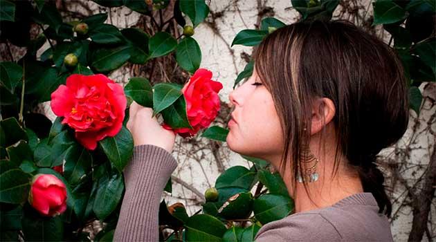 Запах троянд допомагає краще запам'ятовувати інформацію