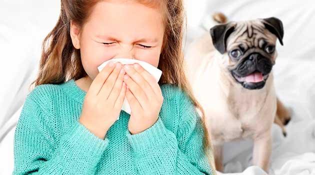 Дитяча алергія на шерсть собаки