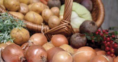 Як зберегти вирощені овочі