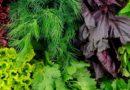 Зелень, яка здатна омолоджувати