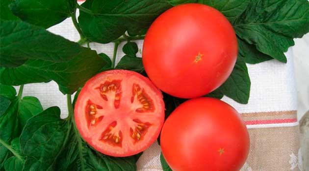 Як правильно зібрати насіння томатів