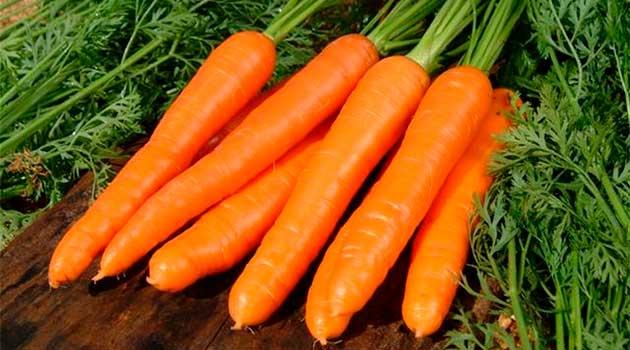 Гарний урожай озимої моркви