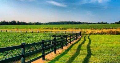 Право власності на земельні паї