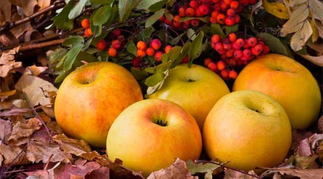 Яблука мочені із горобиною
