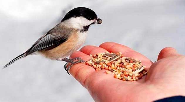 Підгодівля птахів взимку
