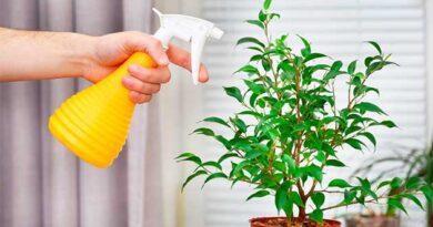 Як правильно обприскувати кімнатні рослини