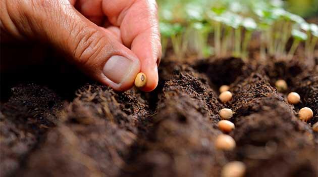 Правило для закладання насіння