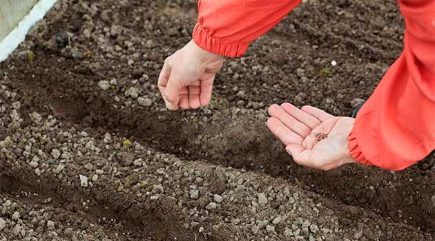 Планування посадки овочів