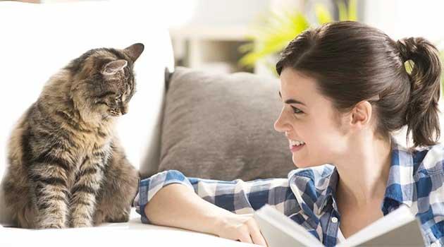 Чи розуміють коти людську мову