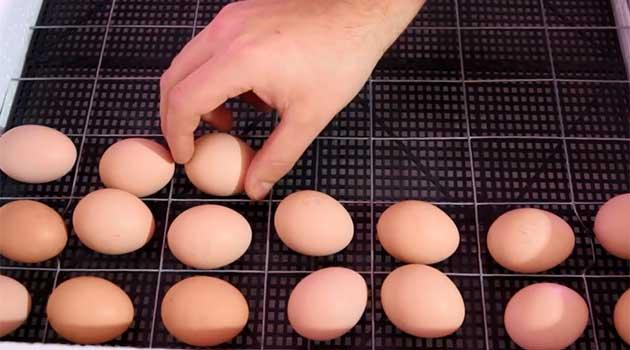 Відбираємо яйця в домашній інкубатор