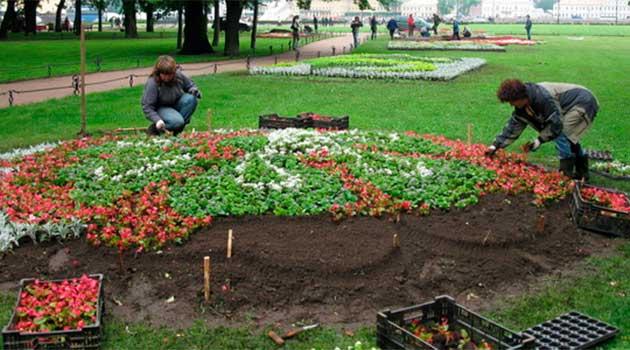 Посадка квітів на клумбі