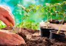 Висадка розсади у відкритий ґрунт