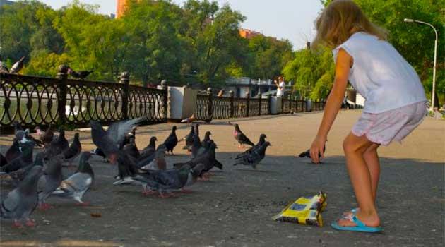 Дівчинка годує голубів
