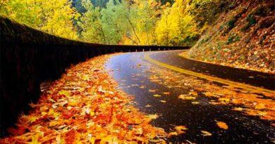 Осінь на дорогах